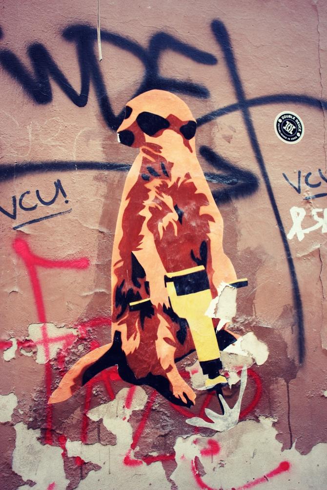 streetart-surykatka