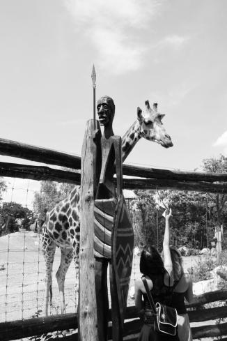 zyrafa-zoo
